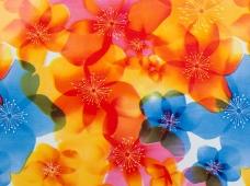 Sleek Spring Flower Blue