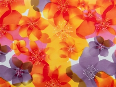 Sleek Spring Flower Lavender